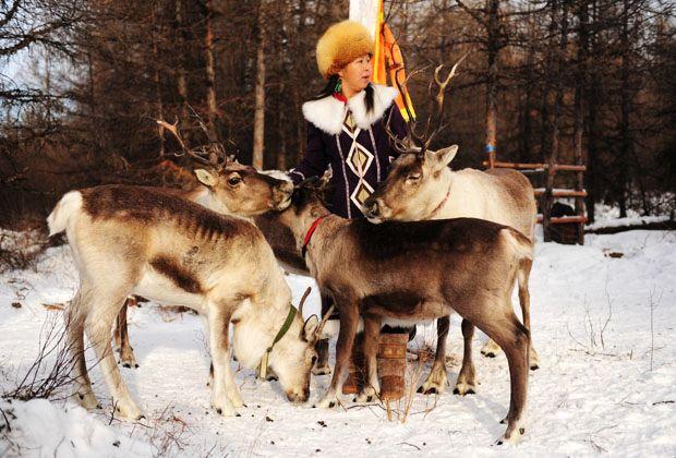 鲁一鲁人与动物_敖鲁古雅鄂温克人与鹿